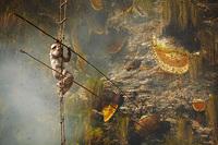 Отважные охотники за диким медом в Непале