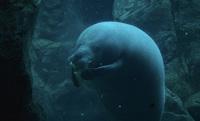 20 удивительных океанариумов со всего мира. Часть 1