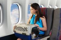 Путешествия с животными — запросто