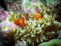 30 невероятных снимков коралловых рифов, где чувствуешь себя как дома