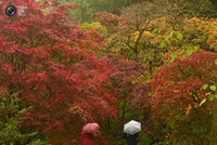 22 Фото рыжей и пестрой осени со всего мира