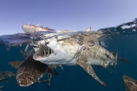 25 фотографий на грани двух миров: под водой и над ней
