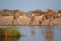 19 снимков далекой и загадочной Африки