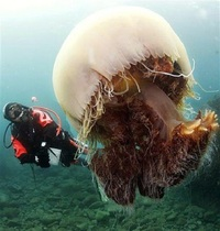 20 гигантских животных, при виде которых на лбу выступает холодный пот