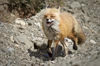 Удивительная прогулка по Национальному парку Денали – 36 фото потрясающей красоты