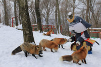 26 фото японской деревни лис — самого милого места на Земле
