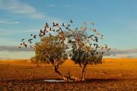 20 фото National Geographic, которые пленяют разум