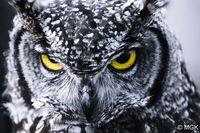 25 абсолютно невероятных сов, на которых невозможно смотреть без умиления и восторга