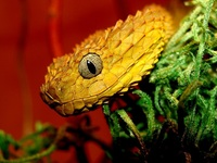 20 сюрреалистических животных, которые не дадут вам заснуть