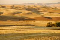 Живописные дюны Пэлус – место идеального сочетания красок самых восхитительных цветов