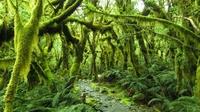 Новая Зеландия – земля сказок, волшебства и пейзажей непередаваемой красоты