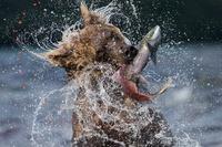 9 самых лучших и незабываемых фото Wildlife Photographer, которые покорят тебя
