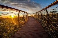 10 фото навесной тропинки в ЮАР, по которой можно ходить над деревьями