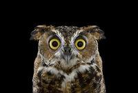 Хранители мудрости: Я исследую мистическую красоту сов