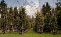 Величественный собор, созданный из живых дышащих деревьев