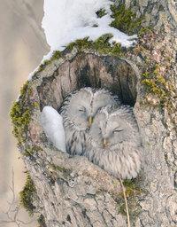 Японский остров Хоккайдо является домом для 7 невероятно милых и необычных животных