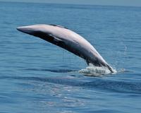 Лучшие места в Европе, где можно встретить китов