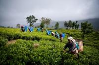 10 уникальных фактов о Шри-Ланке