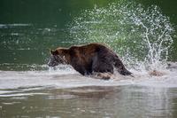 Первозданная Камчатка. Земля медведей