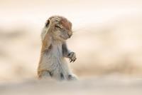 20 уморительных снимков с конкурса Comedy Wildlife Photography Awards 2015