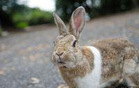 Остров кроликов: захватывающее путешествие на Окуносиму