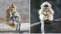 10 причудливых животных, доказывающих, что у природы безграничное воображение