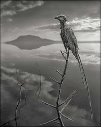 Африканское озеро, которое мгновенно убивает животных