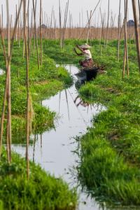 Огород на воде