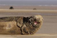15 веселых животных, которые покажут тебе, как надо радоваться жизни