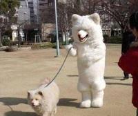 19 очень странных явлений, которые встретишь только в Японии