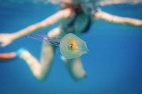 Парню удалось сделать феноменальный снимок: рыба внутри медузы