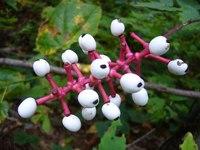 10 самых необычных растений, которые способны удивить своим видом и свойствами