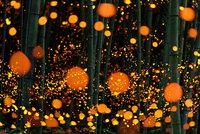10 нереально прекрасных снимков светлячков в летней Японии