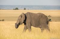 Великаны Африки