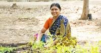 Жители Индии посадили 50 миллионов деревьев всего за одни сутки!