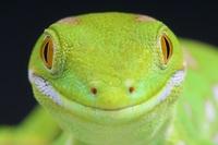 12 забавных фото, на которых даже самые страшные звери улыбаются