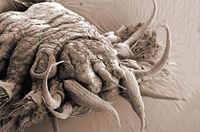 8 ужасающих фото микрочудищ, обитающих в морских глубинах