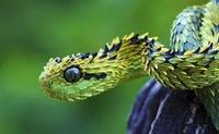 15 дивных и малоизвестных животных, которые заставляют отвиснуть челюсть