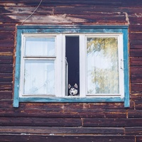 15 снимков о том, что в России есть все, что нужно для жизни