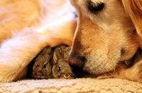 14 любопытных и трогательных фото о том, что чужих детей не бывает... даже у животных