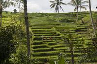14 фото, которые нужно увидеть прежде чем отправиться на Бали