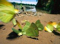 Жизнь в цвете: зеленый