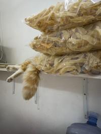 12 забавных фото о том, почему быть котом в Гонконге весьма неплохо