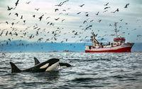 10 фото арктических китов, от которых пропадает дар речи!