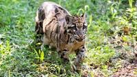10 поразительных созданий, прячущихся в тропических лесах Брунея