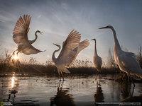 15 победителей конкурса фотографий дикой природы National Geographic 2016 года