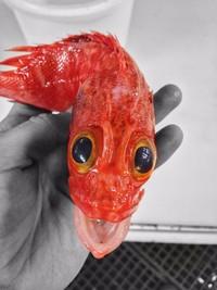 Русский рыбак постит в Твиттере невероятно ужасных глубоководных рыб!