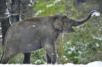28 забавных кадров о сложных взаимоотношениях животных со снегом