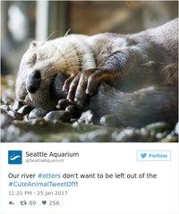 Американские зоопарки выясняют в Твиттере, у кого из них живут самые милые зверушки
