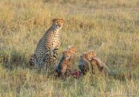Дикая диета. Сколько влезает в слона, льва, бегемота, леопарда..?